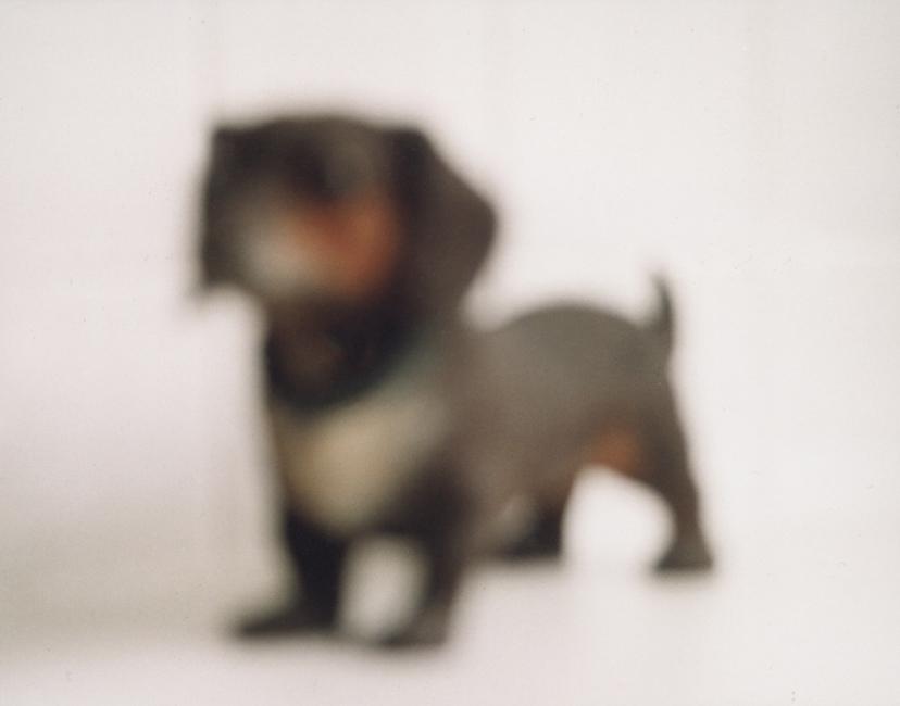 chien-delois